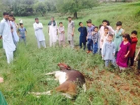 EAyPuy XkAATF1S - Heaven under attack; Neelum Valley | India violates ceasefire